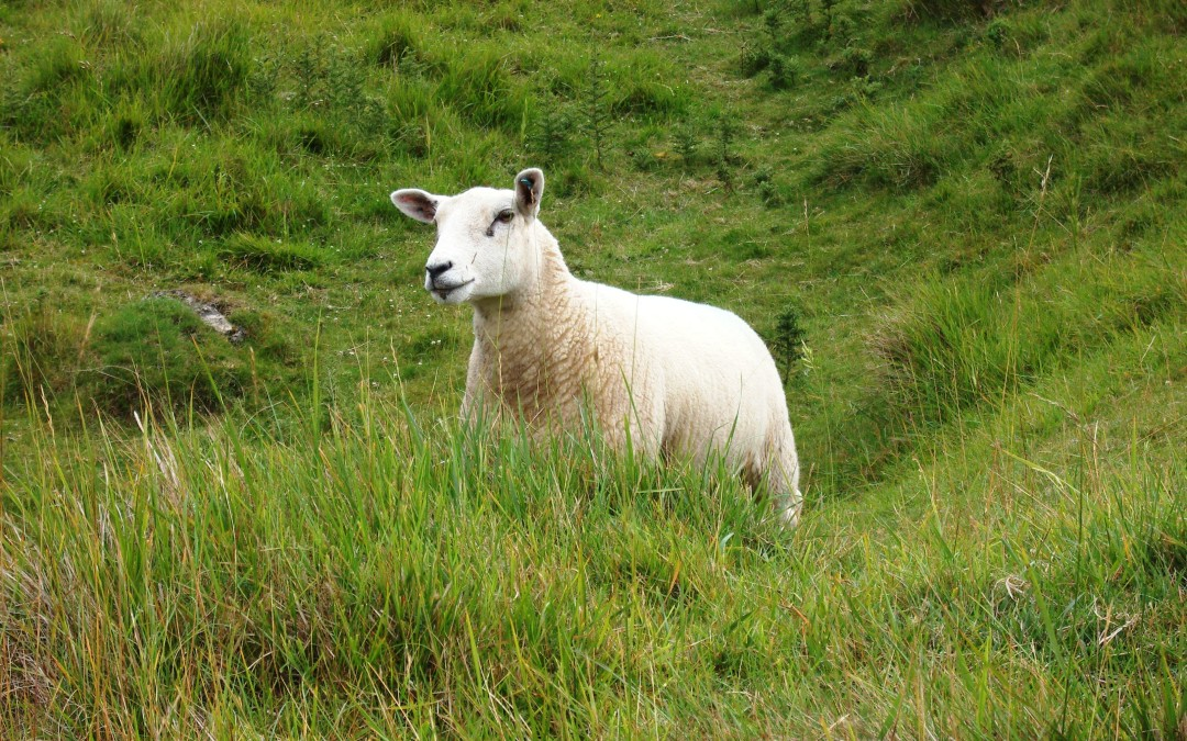 La oveja perdida: Una historia de navidad (P1)